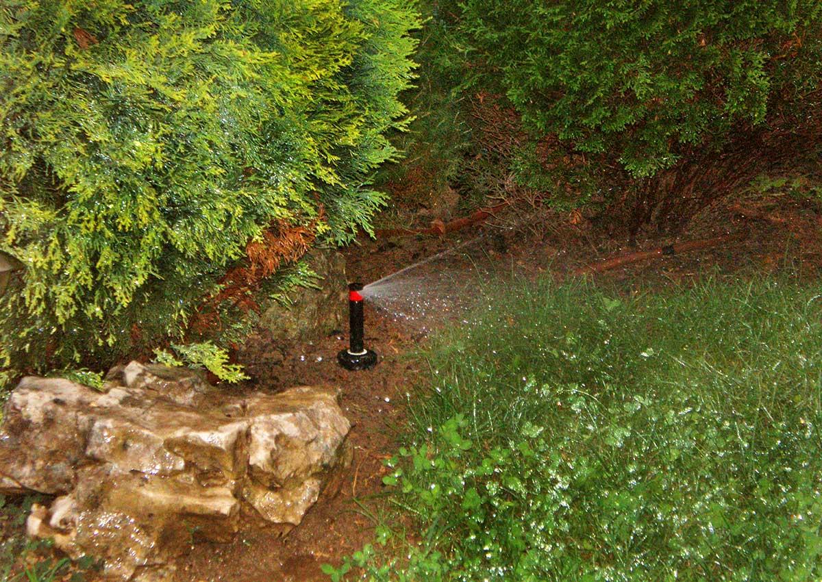Hortikultura Araucaria uređenje i navodnjavanje vrta u privatnoj kući u Oranicama