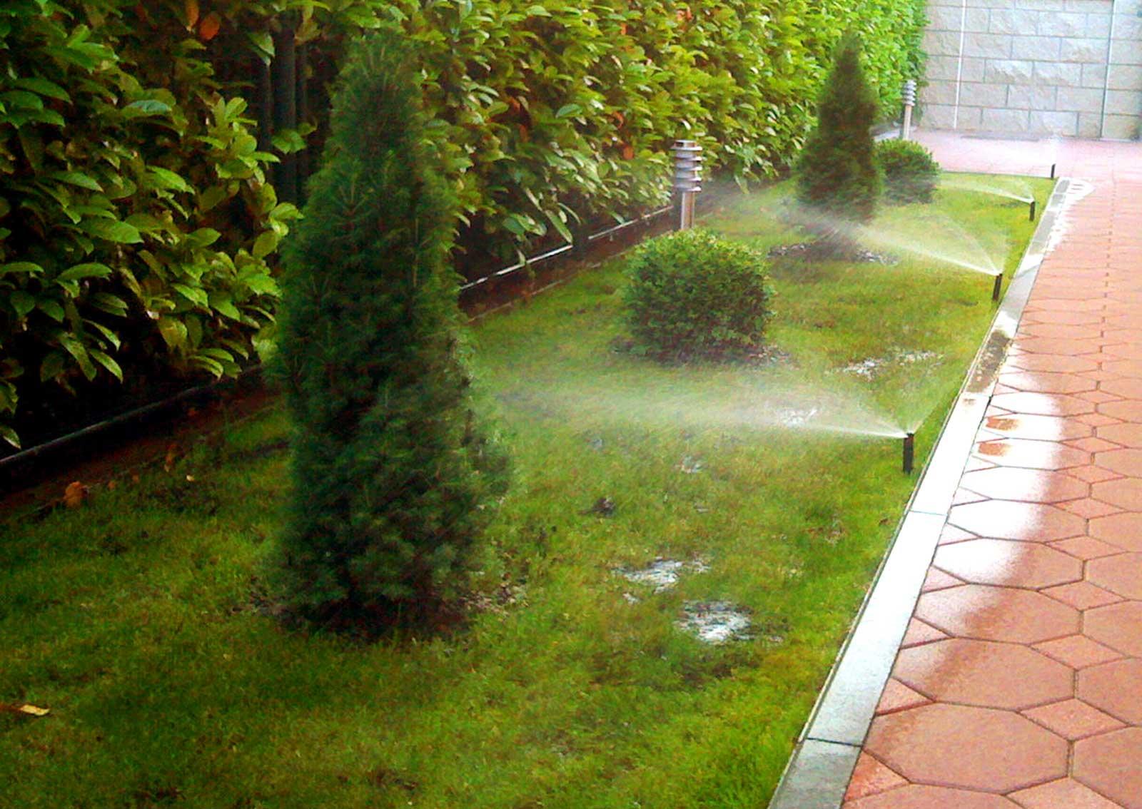 Hortikultura Araucaria uređenje i navodnjavanje vrta u privatnoj kući u Orešju