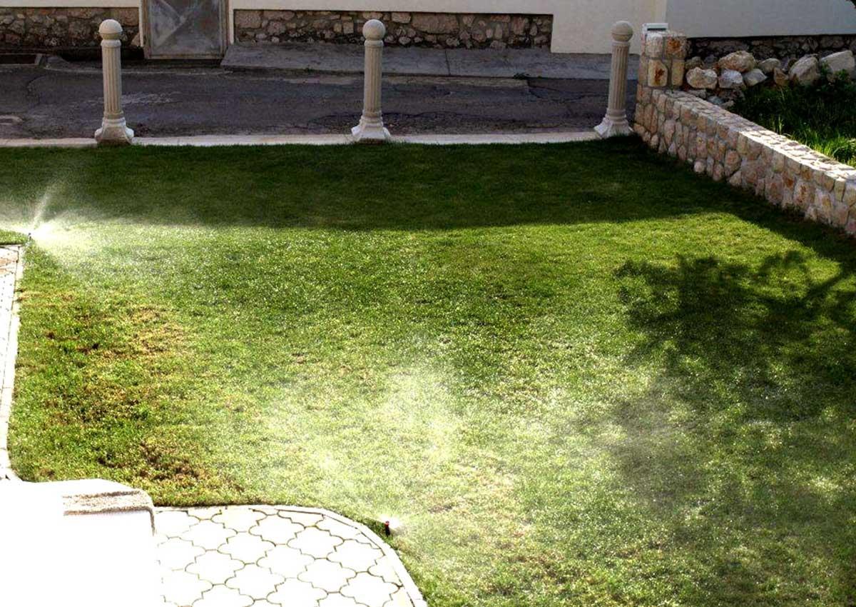Hortikultura Araucaria navodnjavanje vrta u privatnoj kući