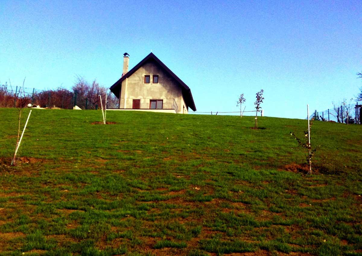 Hortikultura Araucaria uređenje vrta i odvodnje SV. Nedjelja