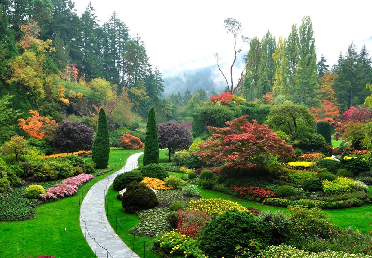 Hortikultura Araucaria planiranje vrta