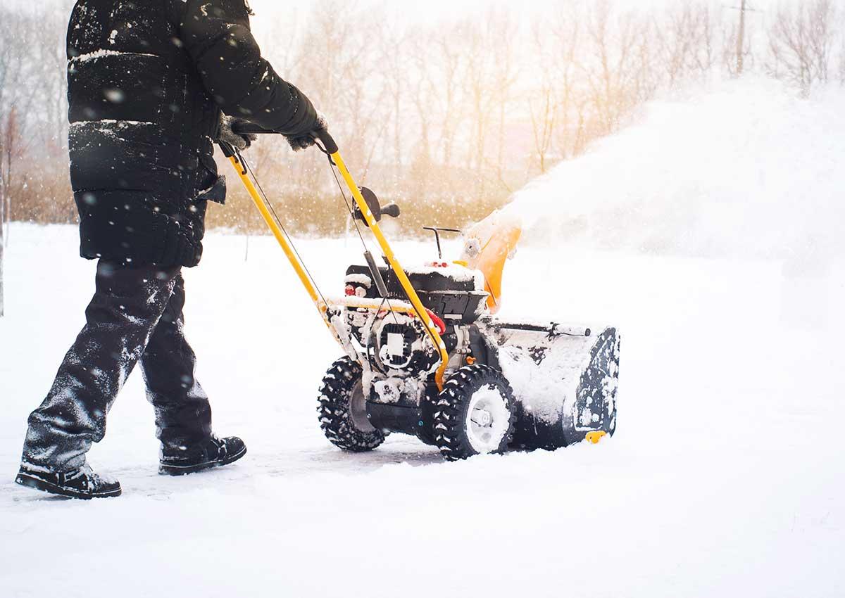 Zimska služba Hortikultura Araucaria